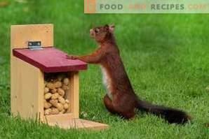 Come conservare le arachidi